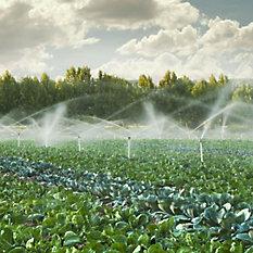 Irrigação Agrícola