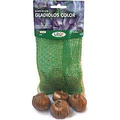 Bulbo gladiolo 4 unidades Lila