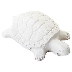 Acondicionador de salud para tortuga
