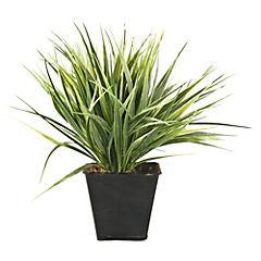 Cactus Verde 9.3 cm