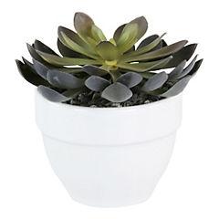 Cactus Verde 8 cm