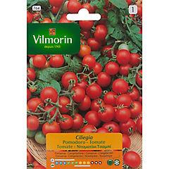 Semilla hortaliza tomate cereza