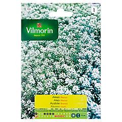 Semilla Flor aliso blanco 5 gramos