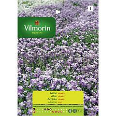 Semilla de flor aliso violeta