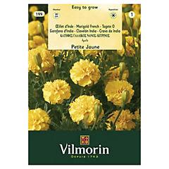 Semilla de flor clavelón india amarillo