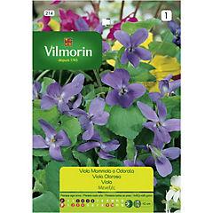 Semilla de flor violeta 4 estaciones