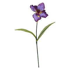 Flor Iris Púrpura