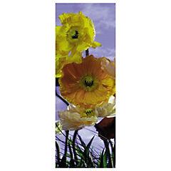Papel fotomural Poppy 220x97 cm 2 paneles