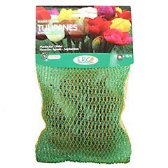 Bulbo de Tulipán variados colores 5 unidades