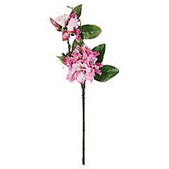Rododendro 88 cm