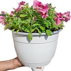 Petunia hybrida 0,15 m exterior