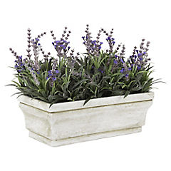 Lavanda H30 Maceta Rectangular