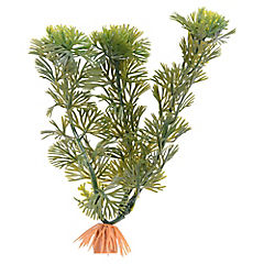 Planta Decorativa Acuario