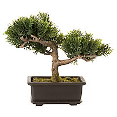 Bonsai Cedro 17,8 cm macetero rectangular