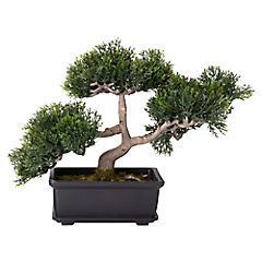 Bonsai Cedro 22,9 cm macetero rectangular
