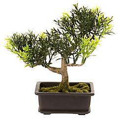 Bonsai 17,8 cm macetero rectangular