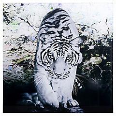 Cuadro vidrio 30 x 30 tigre camina