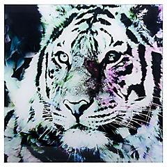 Cuadro vidrio 30 x 30 tigre cabeza