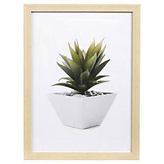 Cuadro cactus 30x40 cm