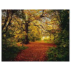 Foto mural Bosque otoño