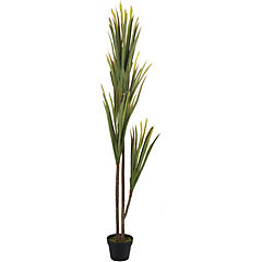 Yucca 4 ramas 160 cm