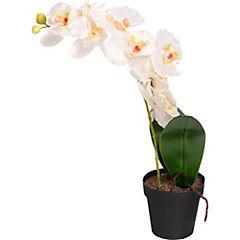 Orquídea 51 cm en maceta