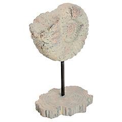 Fósil caracol con base 24 cm