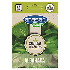 Semilla orgánica aromática albahaca