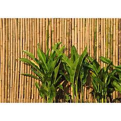 Fotomural Muro Bambu-041 400x280