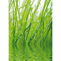 Papel fotomural Freshness 200x280 cm