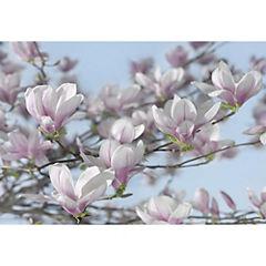 Fotomural Magnolia 8738 368x254 cm
