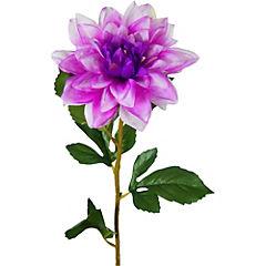 Dahlia 67 cm purpura