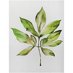 Canvas decorativo Hoja tropical 60x80 cm