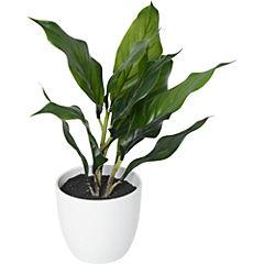 Planta hoja Spathi 28 cm verde