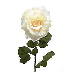 Rosa glitter 73 cm crema