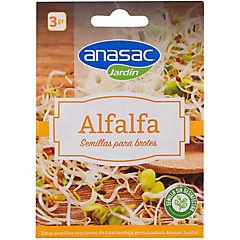 Semilla brote alfalfa 3 gr sachet