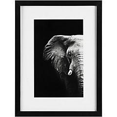 Cuadro Enmarcado Retrato del Elefante
