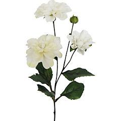 Dahlia Andree  67 cm blanco