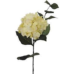 Vara hortensia Aida 79 cm crema