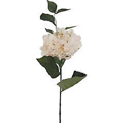 Vara hortensia Aida 79 cm crema/rosa