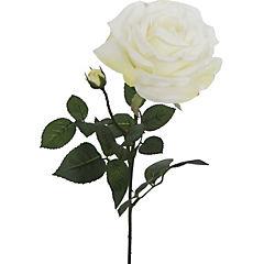 Vara Rosa Anny 70 cm blanco