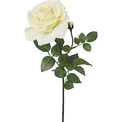 Vara rosa Anny 70 cm crema