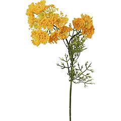 Alyssum 55 cm amarillo