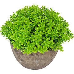 Pasto Verde 16 cm maceta cerámica