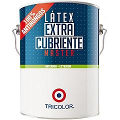 Látex master  verde musgo 1 gl