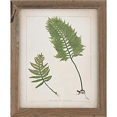Cuadro 30x38 cm 2 botanicas antique