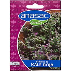 Semilla hortaliza kale rojo 5 gramos