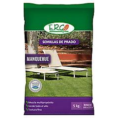 Semilla Prado Manquehue profesional 5 kilos