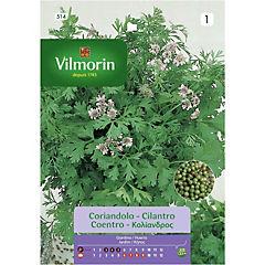 Semilla cilantro 5 gr sachet
