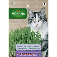 Semilla aromática hierba para gato